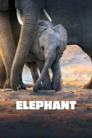 Elephant 2020 PL