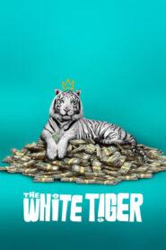 Biały tygrys (2021) PL